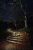 La entrada al bosque (Javier Rosano | Un poquito de fotografía) Tags: sony a7 a7ii ii canon 1740 arbol hayedo moncayo parque natural haya zaragoza estrella nocturna javierrosano makingof linterna cenital escaleras camino sendero senda tarazona borja