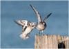 Take off and landing. (Pius Sullivan) Tags: birds nature outdoors post ocean water canon