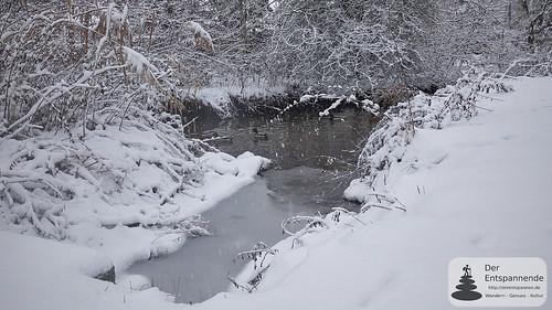 Enten auf der Selz im Winter
