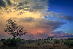 weather at Okonjima Nature Reserve (Steven-ch) Tags: africa trees goldenhour safari storm travel namibia bush weather hdr eos6d canon rain okonjimanaturereserve clouds otjozondjuparegion na