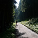 Woods above Feldkirch
