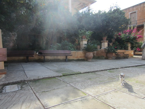 Cats in the courtyard
