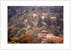 Tahota Pagoda and Woodland (Pictures from the Ghost Garden) Tags: trees color colour slr film japan 35mm vintage woodland cherry pagoda zoom blossom kodak olympus hiroshima miyajima negative 400  cherryblossom sakura portra zuiko om2 olympusom2sp 400iso itsukushima colournegative    3570mm c41 portra400  vintagecameras om2sp tahota
