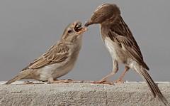 (mohd alsulaiti) Tags: hot bird birds canon google zoom group explore doha qatar nise  natgeo 2015   qtr            7dcanon   mohdalsualiti instagramenjoyqtr
