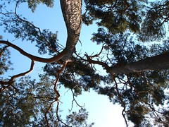 Goffert Park - Nijmegen (mdarowska) Tags: city trees sky holland tree netherlands dutch nijmegen europe thenetherlands nl visitholland