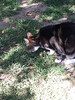 merry.. dont (weirdokay) Tags: eatinggrass catbusiness mobile2015 housesittingjunejuly2015 itsmerry merrybuns