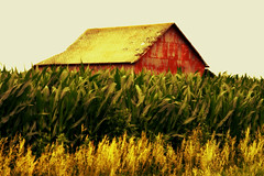 Hidden Treasure (forestforthetress) Tags: colors barn rural corn nikon outdoor farm crops omot