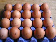 Dunnes 20 Large Farm Fresh hen eggs 03082015 - Egg Weights - 3.50 11-03-2015 (Lord Inquisitor) Tags: brown eggs hen dunnes eggcarton eggtray heneggs eggweights