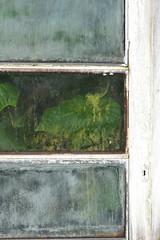 Botanical Garden (noeminiesta) Tags: door windows brussels naturaleza white verde green blanco window garden botanical hojas ventana puerta nikon jardin bruxelles ventanas blanca botanico botanic tres february febrero fenetre blanch jardi 2015 nikonistas