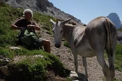 Hiking Passo Giau (thomas_wikstrom) Tags: italy cortina italia hiking donkey passo giau dampezzo sna
