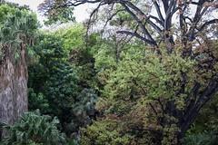 tree house (patri aragon) Tags: landscape paisaje treehouse ilovethistree patriciaaragonmartin patriciaaragnmartn
