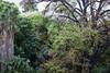 tree house (patri aragon) Tags: landscape paisaje treehouse ilovethistree patriciaaragonmartin patriciaaragónmartín