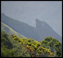 Munnar : Top Station (indianature13) Tags: india mountain lake nature tea kerala april westernghats munnar 2015 topstation kundalalake madupettylake indianature sholaforest highranges