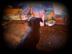 apreciador del arte (Felipe Smides) Tags: arte perro zapata valdivia mutante callejero clandestino smides felipesmides sergiozapata