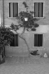 façade (fotoleder) Tags: arbustre feuillage fenêtres volets italie été fotoleder flederma venise torcello veneto