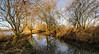 Riverbank walk (dangerousdavecarper) Tags: strumpshaw fen tidal surge flood trees paths river yare reflections