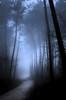 À l'approche (david49100) Tags: 2016 maineetloire seichessurleloir arbres chemin d5100 décembre nikon nikond5100 path trees