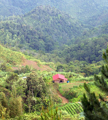 20060803_53 (Badly Drawn Dad) Tags: geo:lat=599390233 malaysia mys sabah geo:lon=11655049503 geotagged agriculture fairygardenresort farming terraces