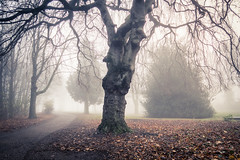 La vie mystérieuse des arbres... / The Mysterious Life of Trees (Gilderic Photography) Tags: forest mist fog morning park liege chartreuse belgium belgique belgie gilderic canon g7x