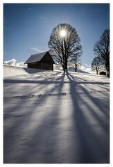 Shadow 1 (in explore) (Der Reisefotograf) Tags: steiermark styria österreich austria snow schnee snowylandscape berge mountains tree shadow