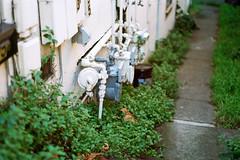 (Casey Lombardo) Tags: sananselmo sananselmoca marincounty kodak kodakfilm kodakgold kodakgold200 film filmphotography filmgrain filmscans colornegative colorfilm minoltasrt101 58mm path pathway clover weeds pipes