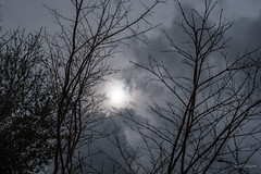 Storm's in the Air (Explored) (gwshamb) Tags: trees rainy limbs sun weather bare clouds