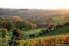 Aubin Neufchateau - La Marnière (2013) (Robert Claessens) Tags: robert bob claessens automne automn herfst aubin neufchateau dalhem aubel visé warsage marnière vignes vignoble vineyard