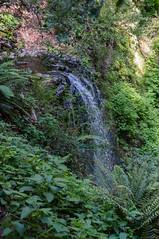 Berry Falls (Chris_Michael) Tags: california nature america forest landscape outdoors us spring woods unitedstates hiking hike trail backpacking backpack northamerica redwoods bouldercreek bigbasinstatepark bigbasinredwoodstatepark berrycreekfallstrail