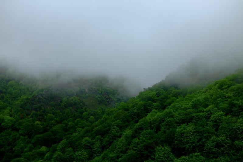 Fog Spirit II.