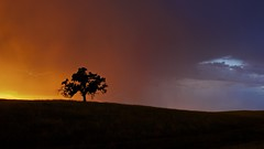 Sunset Lightning (ernogy) Tags: california lighting sky storm tree colors silhouette landscape oak folsom thunderstorm sacramento prairie ernogy oaklightning