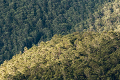 LookMeLuck.com_Australia-024.jpg (Look me Luck Photography) Tags: wood verde green nature colors forest landscape oz couleurs australia paisaje bluemountains vert colores bosque newsouthwales aussie paysage downunder bois oceania fret oceanica ocanie oceana terraaustralis