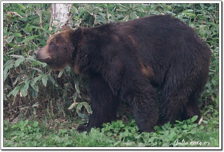 熊牧場 (7)