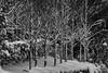 IMG_2320mono (ManFromOz) Tags: snow blackheath bluemountains gemaxphotographics ©geoffsmith