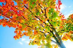 Autumn I (wide-angle.de) Tags: digital germany de top500 treesi y201212 y201212treestop500