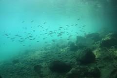 Lac Léman 2015-21