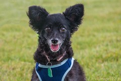 Poptart (2 of 5) (Dash68) Tags: rescue dogs flickr august poptart 2015 wagsandwhiskers
