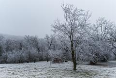 Z16_3997 LT (Zoran Babich) Tags: winter frost zagreb croatia hrvatska cityofzagreb hr
