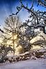 Solheim, Norway (Vest der ute) Tags: g7x norway røyksund rogaland winter snow sky trees sun fav25 fav200