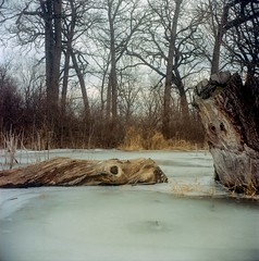 Frozen Things: Logs [5] (jwbeatty) Tags: 120 analog ektar ektar100 film filmisnotdead ice illinois independancegroveforestpreserve ishootfilm kodak libertyville logs mediumformat nature project365 winter yashica yashicamat124g