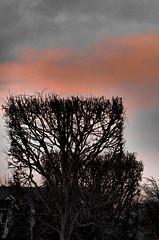 Modest shades of the December sunset (vorotnik1) Tags: december sunset sky treescape shortest day