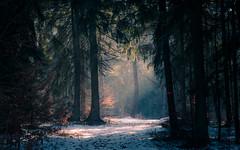 path of light (Florian Grundstein) Tags: tree forest light shadow misty sunray sunbeam sonnenstrahlen nebel wald licht schatten bestofflickr picoftheday nopeople bestofnature natural nature hike wandern unterwegs natur oberpfalz bayern upperpalatinate bavaria