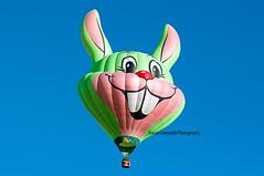 _DSC0441-mongolfiera Coniglio Lisenberg Kanine 2017 (Rocco Comandè 2010) Tags: roccocomandè©photography coniglio mongolfiera mondovi cn 29°radunomongolfieremondovi2017 2017 volare ballon aerostatic sezlk lisenberg kanine