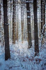 In the distance (reclaimednj) Tags: tuckerton newjersey unitedstates us zenithelios44m458mmf2 bassrivertownship bassriverstateforest nj 2017 forest winter snow