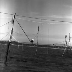 101259 07 (ndpa / s. lundeen, archivist) Tags: nick dewolf nickdewolf october bw blackwhite photographbynickdewolf 1959 1950s film 6x6 mediumformat monochrome blackandwhite capecod provincetown mass massachusetts water ocean sea nets fishingnets fishing net weirnet weirnets trapnet trapnets poles bird gull seagull seabird