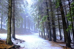 Blue forest..... (Marco Allegro) Tags: