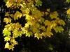 Ce fut un bel automne.. It was a beautiful autumn.. (alainpere407) Tags: automne autumn fall feuille leaf parcdesbutteschaumont paris vividstriking treesdiestandingup
