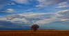 Lone Tree (Circled Thrice) Tags: rockymountainarsenal nationalwildliferefuge refuge tree lonetree field meadow sky bigsky bluesky clouds cloudy aurora commercecity denver colorado co canon eos rebel t5i sigma