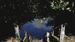 (hhenck) Tags: canon 5d canon5d grain nature naturallight green daylight sunlight lake summer