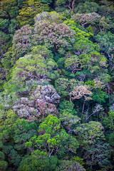 Hill Side (stevenbulman44) Tags: costa costarica montaverda lush canon 70200f28l tripod green foliage forest hillside