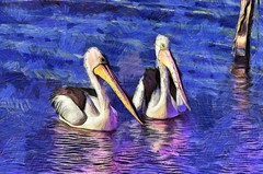 Pelicans8 #1 (bhojman) Tags: pelicans bird water lake photoart digitalpainting lakemacquarie nsw australia